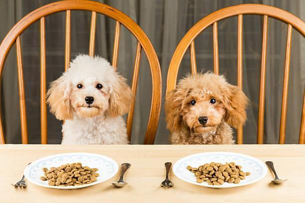 What Do Poodles Like To Eat?