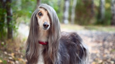 10 Amazing dogs that bark the least